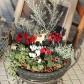 パラボッサが作ったクリスマスの寄せ植え